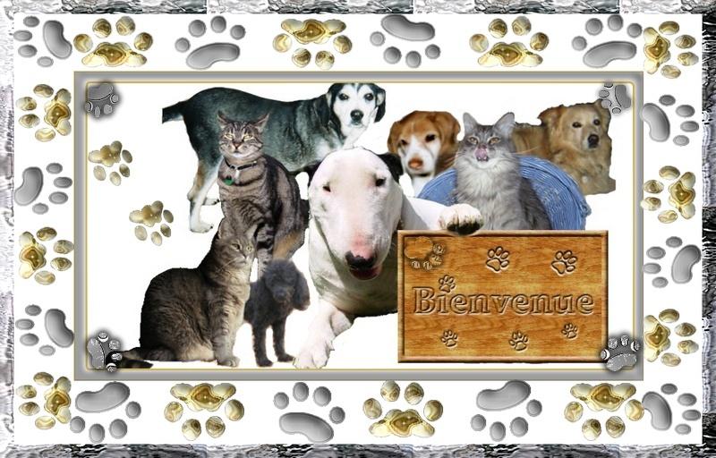Histoire d'animaux