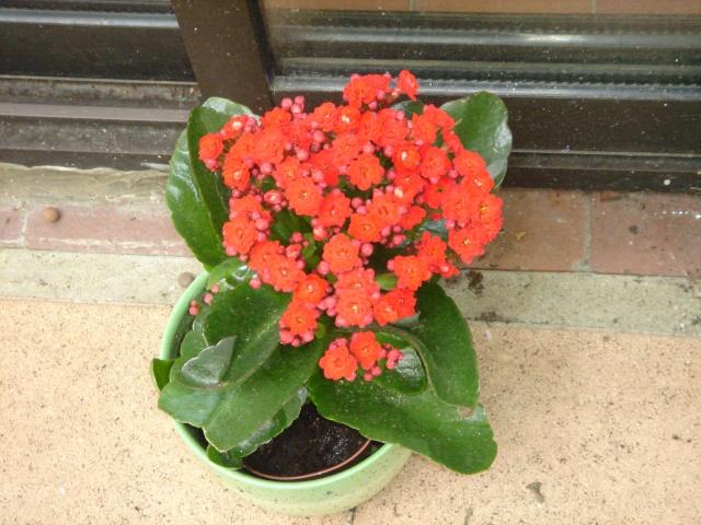 Plantes grasses fleurs trouvez le meilleur prix sur for Recherche sur les plantes