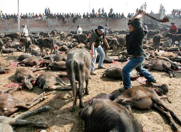 Mettre fin aux carnages au Népal