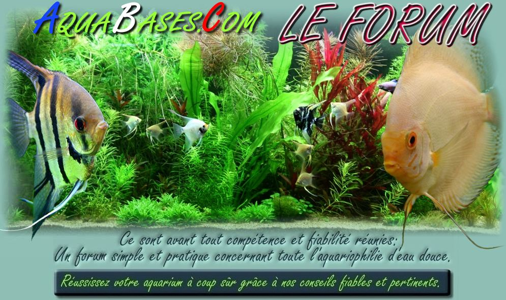 AQUABASES.COM  le forum