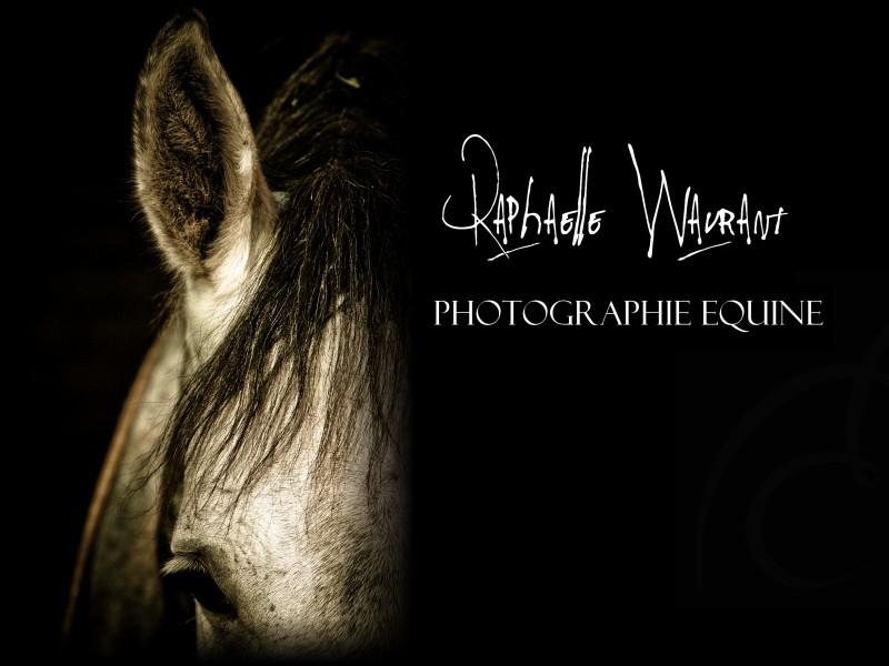 R. Wavrant Photographe Equestre