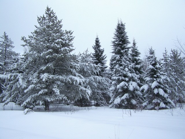 hiver10.jpg