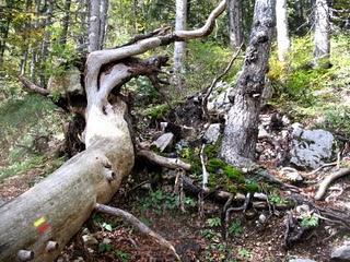 arbre mort1