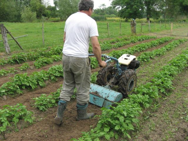 Les patates page 2 - Butter pomme de terre ...