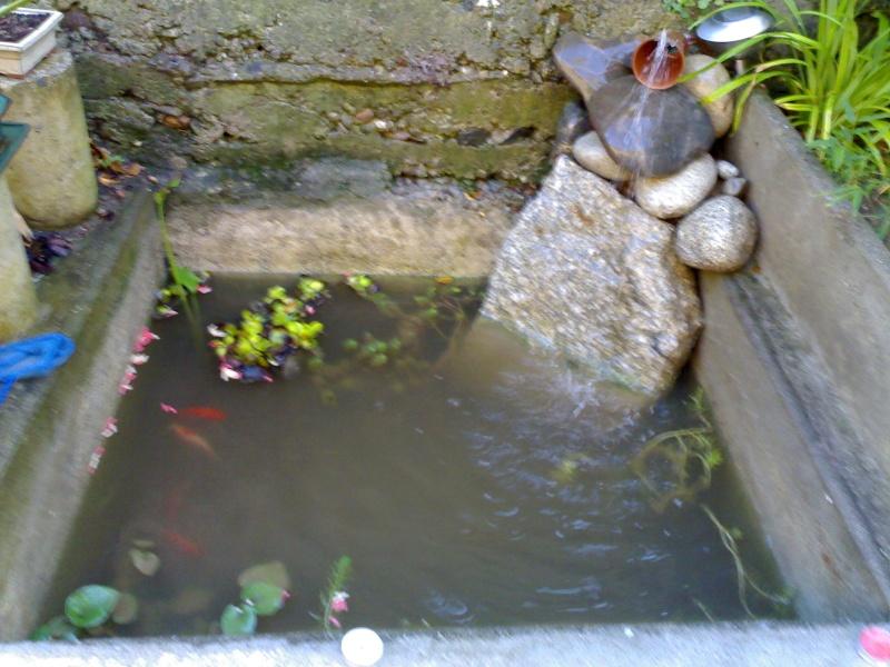 Petit bassin dans un ancien lavoir forum aquajardin bassin ko mare tang - Petit bassin de terrasse ...