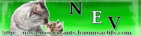 logo_f11.jpg