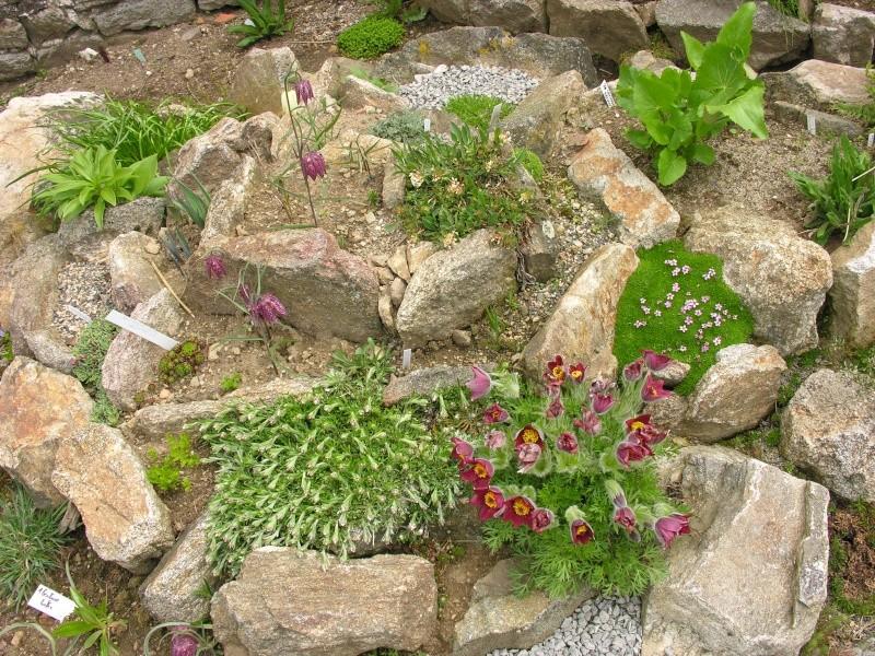 Photo d 39 ensemble rocaille maxandrosace - Jardin de rocaille et jardin alpin enidees inspirantes ...