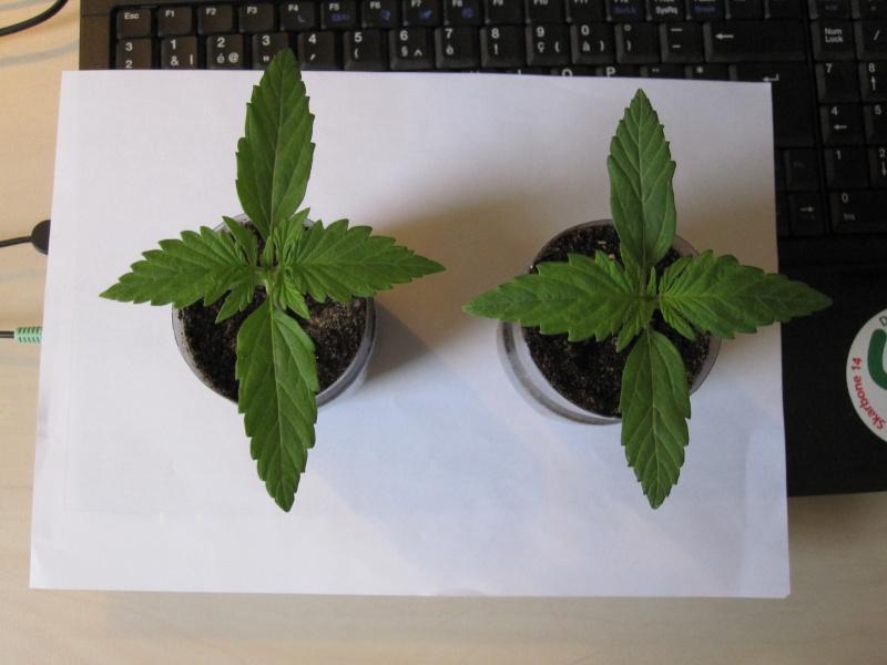 Terreau pour cannabis interieur 28 images tuto pour for Cultiver du cannabis en exterieur