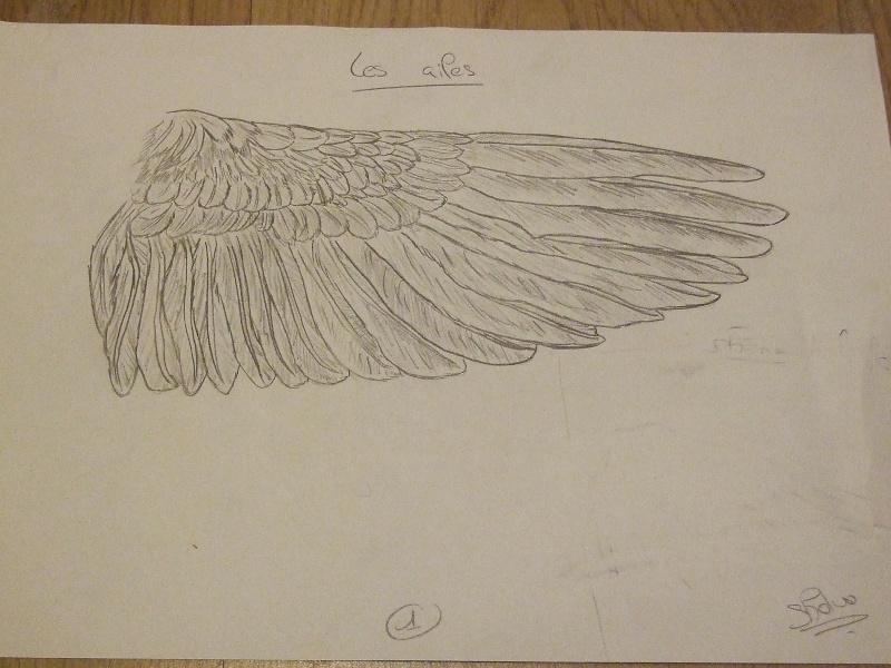 Les plumes et les ailes des oiseaux - Signification des plumes d oiseaux ...