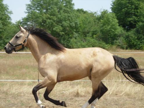 photo cheval souris