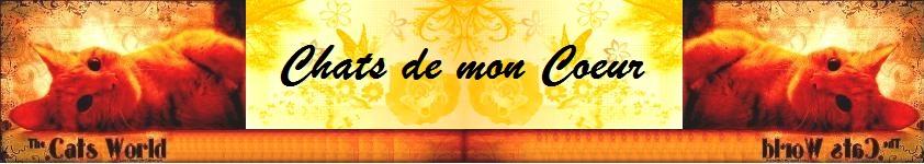CHATS DE MON COEUR
