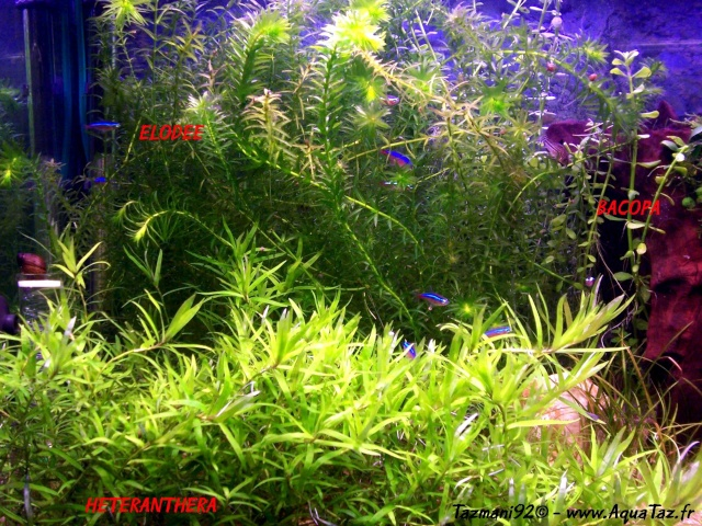 vente terminee 92 4 esp ces de plantes d 39 aquarium eau. Black Bedroom Furniture Sets. Home Design Ideas