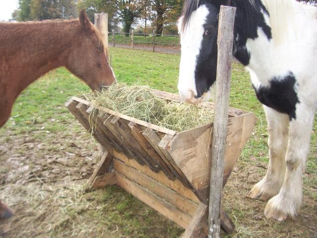 Ratelier foin en bois fabrication maison page 2 - Porte de box pour chevaux a vendre ...