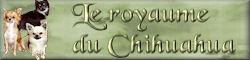 Le royaume du chihuahua