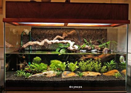 mon aquaterarium 224 cynops