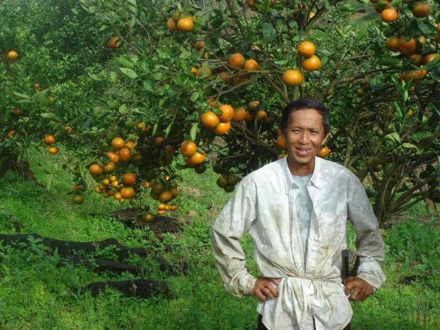 Guyane oranges