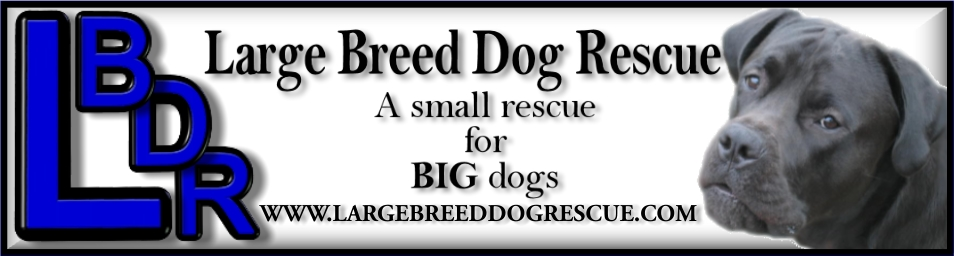 THE LARGE BREED DOG RESCUE FORUM