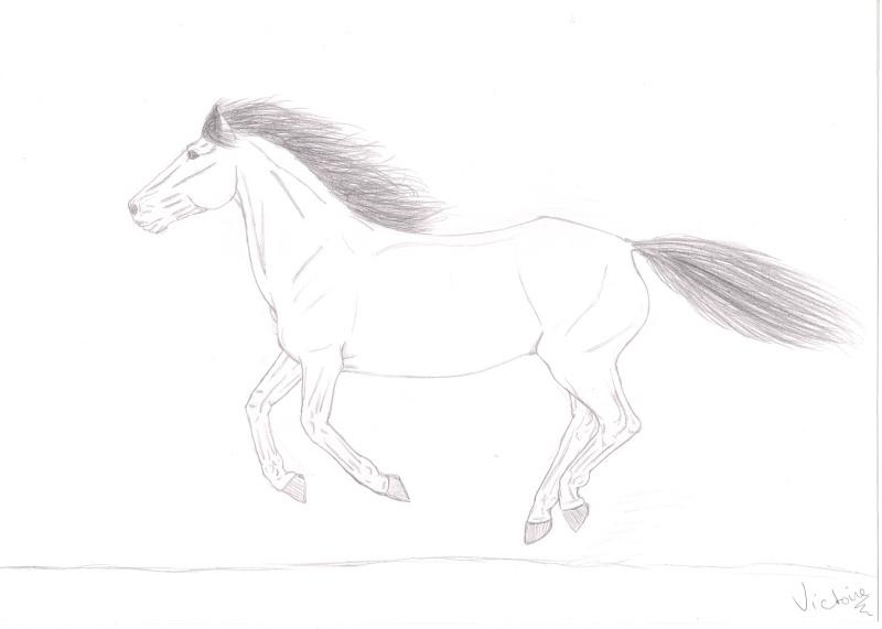 Galerie de elrosette - Comment dessiner un cheval au galop ...