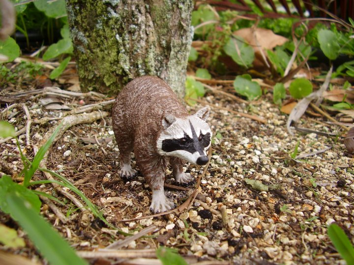 safari ltd raccoon in the backyard
