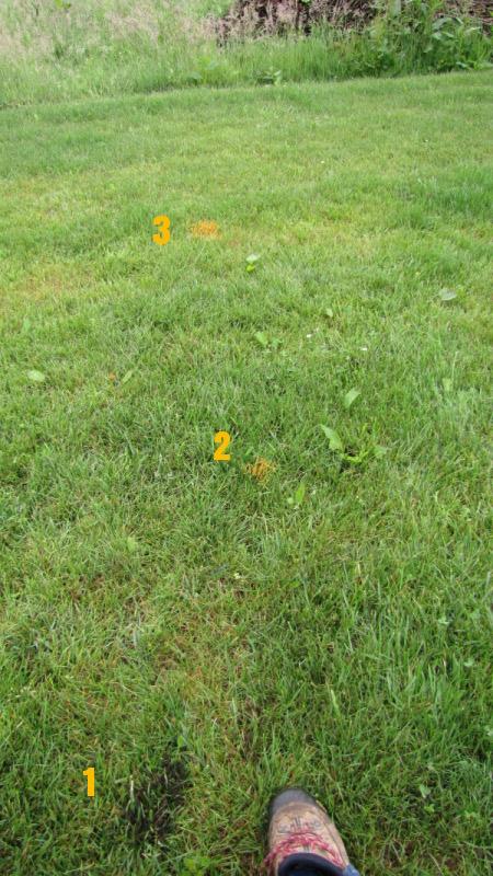 Amas d 39 oeufs sur la pelouse for Recherche tonte pelouse
