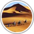 واحة جديد  إقليم وادي الذهب -الداخلة-