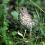 Породы птиц