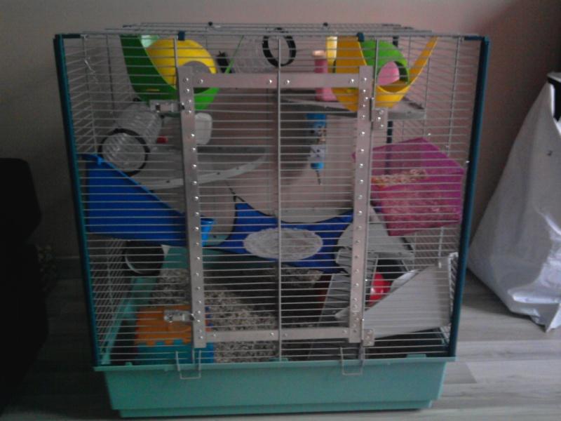 id e am nagement cage rat. Black Bedroom Furniture Sets. Home Design Ideas